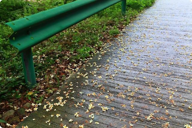 石子路做法_雨中芦茨 宛如仙境 - 白色的钻石小鸟的日记-babytree 宝宝树